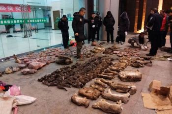 CHINA. In this January 9, 2020, photo provided by the Anti-Poaching Special Squad, police look at items seized from store suspected of trafficking wildlife in Guangde city in central China's Anhui Province. (AP)