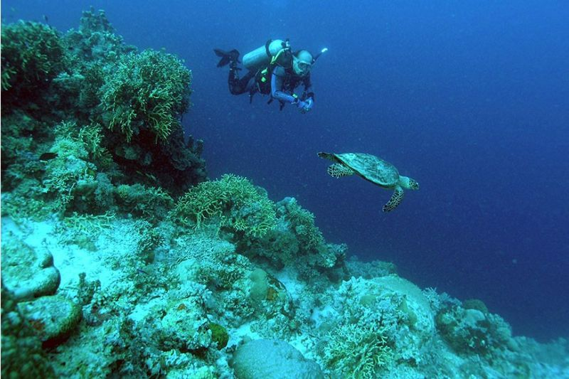 RECOGNITION. The town of Moalboal, located down south of Cebu, is famous for diving. The Philippines has obtained several awards in 2019. One of them is the World's Leading Dive Destination at the 2019 World Travel Awards. (Sunstar File)