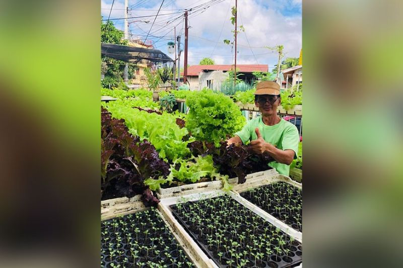DAVAO. Lunhaw awardee and organic farming advocate Maxey Atog shows his recent lettuce harvest in his container garden in Barangay Angliongto. (Photo from Maxey Atog's Facebook page)