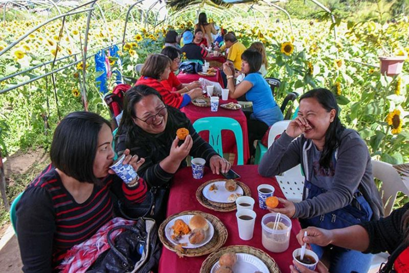 TIME OFF. Visitors of the sunflower farm in Shilan, La Trinidad enjoy free coffee and sweet potatoes. (Photo by Jean Nicole Cortes)