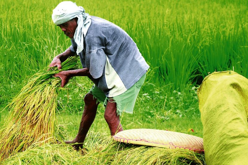 PRODUC-TION. To ensure food sufficiency, the Agriculture Department is calling on local executives to produce more food during this time of health and economic crisis. (SunStar file)