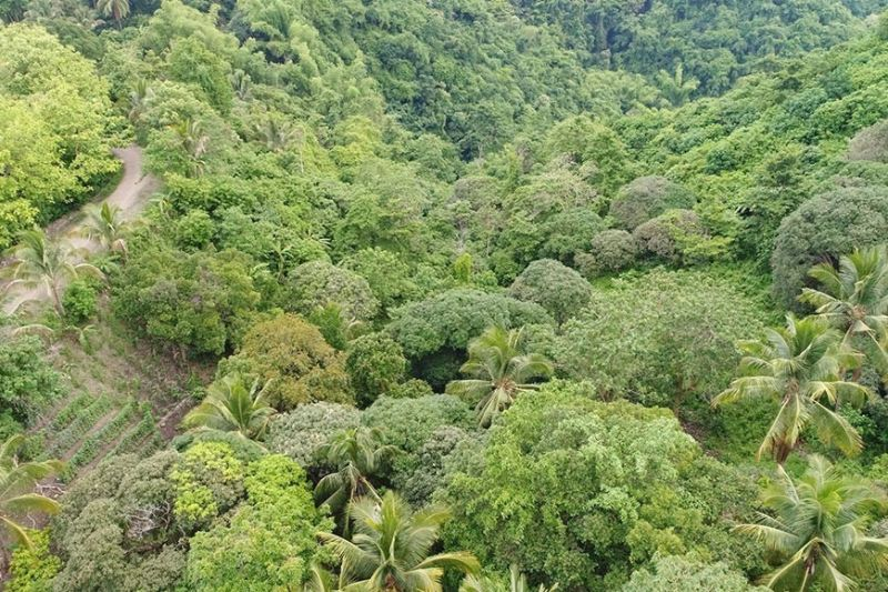 PROJECT SITE. This is an aerial view of the proposed site of a new public cemetery for Covid-19 mortalities in Barangay Sapangdaku. (Photo Courtesy of DENR 7)