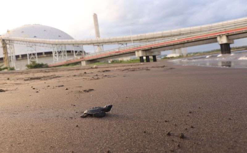 RESPONSIBILITY. AboitizPower's responsible operation of its Therma South baseload power plant in Davao ensures environmental conservation. As a result, the said facility makes an ideal nesting site for sea turtles and a home to various bird species. (Contributed photo)