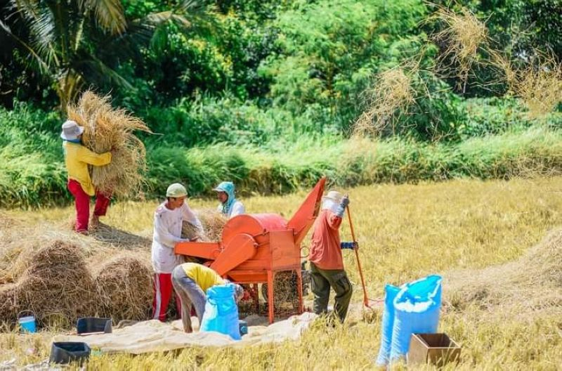 The National Food Authority (NFA) in Western Visayas is working on ensuring enough buffer stocks amid the prevailing Covid-19 pandemic through one, ramping up its palay procurement in the region. (Photo courtesy of DA-6)