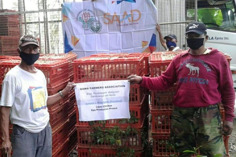 The Department of Agriculture, through the Special Agricultural Area for Development, provides livelihood assistance to two farmers association in Zamboanga del Norte that are into Layer Chicken Project. A photo handout shows one of the group-beneficiary of the livelihood who received layer chicken along with fabricated cages. (SunStar Zamboanga)