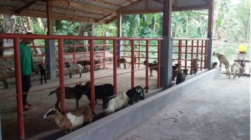 NEGROS. The Hinoba-an Animal Rescue Center that rescued animals affected by floods on the surge of Typhoon Quinta in the southern part of Negros Occidental recently. (Contributed photo)