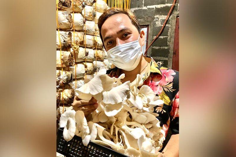 DAVAO. Si Ronnie De Leon Nacua nang-harvest sa iyang Oyster Mushroom. (Jeepy P. Compio)