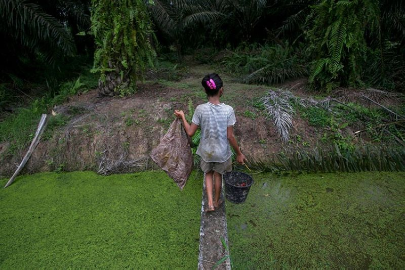 INDONESIA. A child carries palm kernels collected from the ground across a creek at a palm oil plantation in Sumatra, Indonesia, Monday, November 13, 2017. Child labor has long been a dark stain on the $65 billion global palm oil industry. (AP)