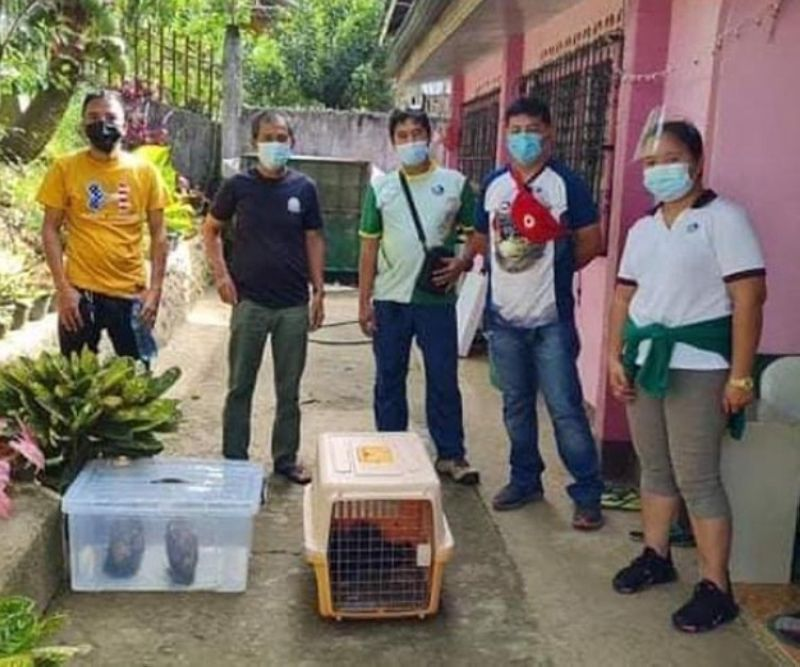 ZAMBOANGA. The Department of Environment and Natural Resources (DENR) has placed under rehabilitation two Giant Scops Owls and two Asian Palm Civets in preparation for their release back into the wild. A photo handout shows DENR personnel retrieve the wildlife species on Wednesday, January 6, in Poblacion village, Sominot, Zamboanga del Norte. (SunStar Zamboanga)