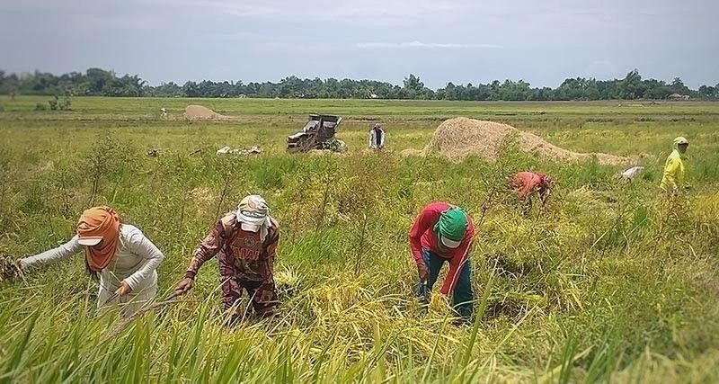 SUNRISE INDUSTRY. The government should pour more investments in the agriculture sector as this will help the country in its economic rebound. (SunStar file)