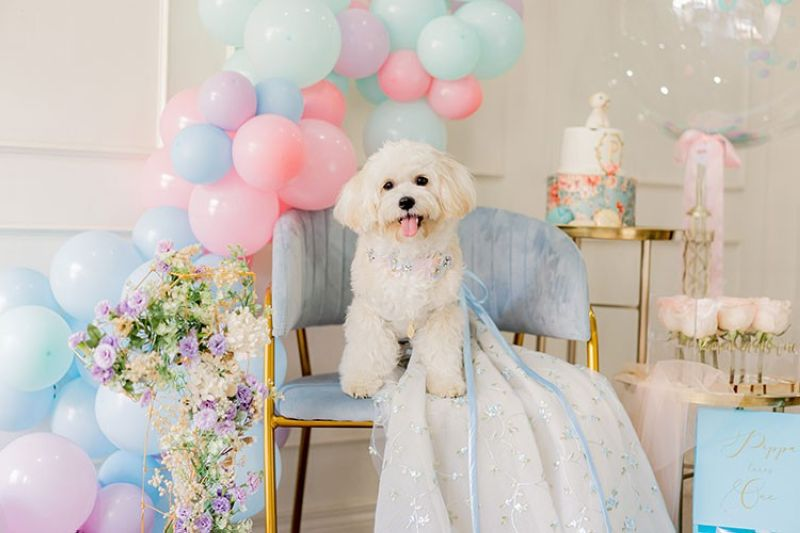 HAPPY 1ST BARKDAY. When Pippa turned one recently, young fashion designer Maizy Colleen Tan wanted to celebrate her pet's barkday to honor her for a year's worth of love and joy she brought into the Tan household and into her atelier. (Contributed photo)