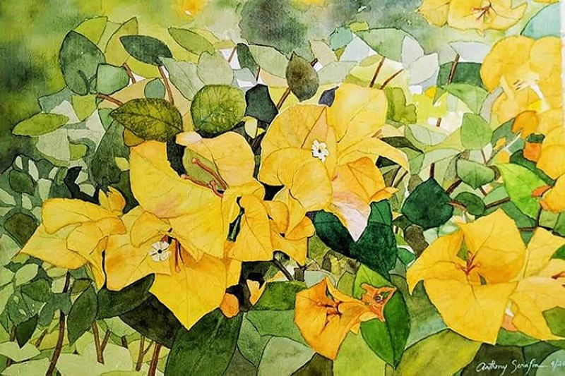 Anthony Serafin. Bougainville 3. Watercolor on Arches Paper. 15x20. 2020. (Photo from the virtual exhibition)