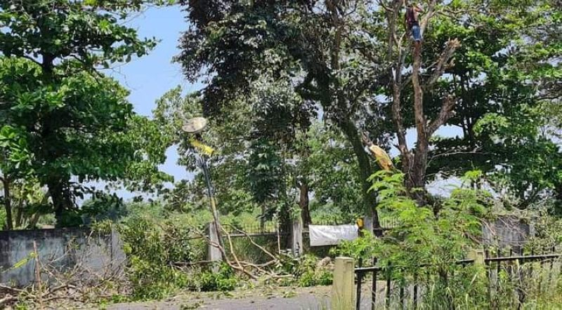 BACOLOD. Netizens react on social media to the cutting down of the 26 fully grown mahogany, acacia and rubber trees along Bacolod-Kabankalan highway as part of a sidewalk improvement project yesterday. (Contributed photo)
