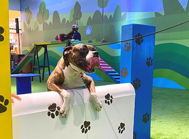 INDOOR DOG PARK. A dog enjoys obstacle courses at the Paw Park in SM City Olongapo Central. (Contributed photo)