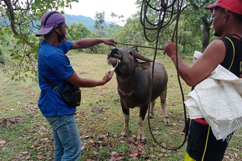 NEGROS. Some 57 client-raisers in Barangay San Miguel, Murcia town avail themselves of various services through the Medical Veterinary Mission conducted by the Provincial Veterinary Office of Negros Occidental recently. (Contributed Photo)
