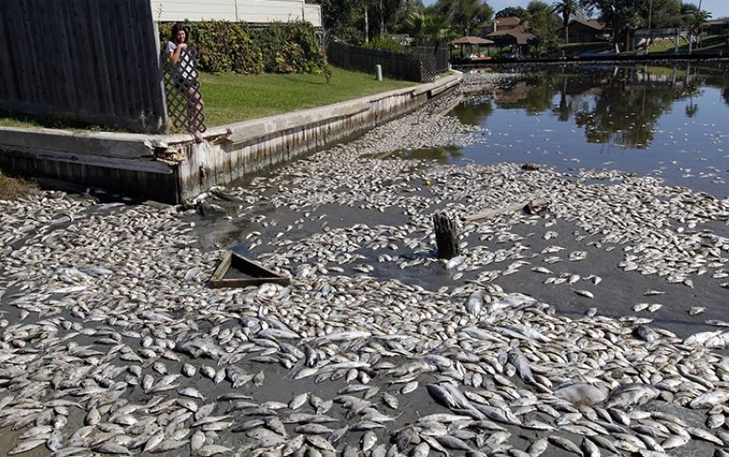 In this Tuesday, Oct. 30, 2012, file photo, Kim Bertini looks over some of the 15,000 dead fish that washed up near her backyard on Lake Madeline in Galveston, Texas. Bertini said she and her husband, Chris, noticed dying fish on a Saturday and woke up the following morning to the dead, floating fish. The Galveston County Daily News reported that experts blame low levels of dissolved oxygen for the fish kill in Lake Madeline. Oxygen levels have dropped in hundreds of lakes in the United States and Europe over the last 40 years, a new study has found. (Jennifer Reynolds/The Galveston County Daily News via AP, File)
