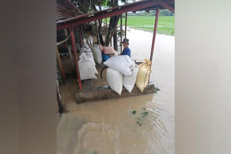 NEGROS. Some rice farmers in Valladolid town were affected by the recent onslaught of Tropical Storm Dante incurring P2.82 million worth of damage. (Contributed photo)