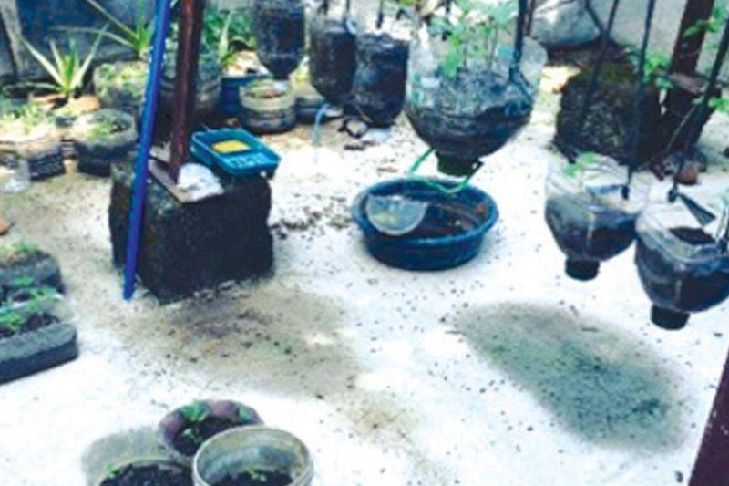 GARDEN: Kini ang 'We Garden' project nga offline-first, technology enabled, ug hydroponics community garden nga gigama sa pag-abag sa Legazpi City, Albay sa pagsulbad sa ilang problema sa basura nga plastik./ Tampo