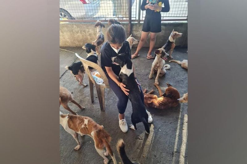 NEGROS. Pawssion Project renovates Bacolod City pound. (Contributed photo)