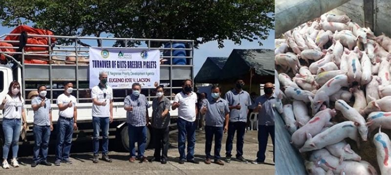 BACOLOD. Turnover of breeder pigs to local government units in Hinigaran and Kabankalan City Tuesday, September 14. (Contributed photo)