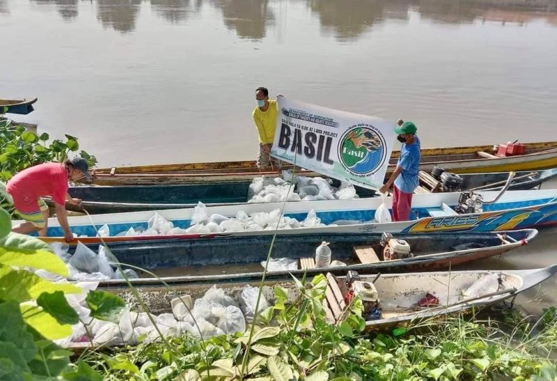 BASIL PROJECT. Fingerlings are released in Apalit waters as part of BFAR-Central Luzon's Basil project. (Contributed photo)