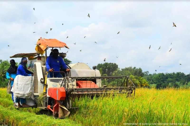 NEGROS. A 39 percent increase in the production volume of palay during this wet cropping season is being eyed in Western Visayas. (Contributed photo)
