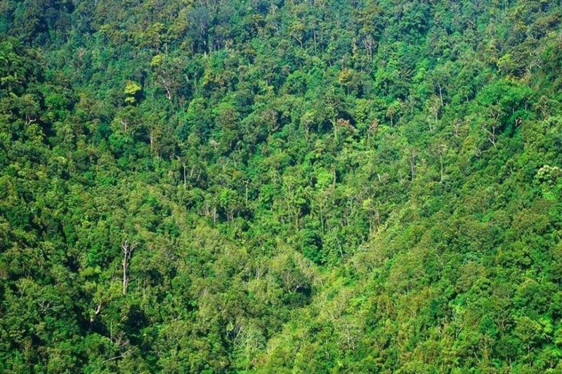 NEGROS. Trekking activities at the Northern Negros Natural Park are temporarily suspended due to reported presence of insurgents. (NNNP photo)