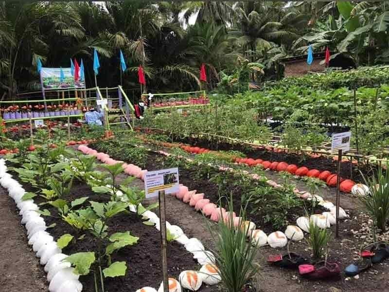 Barangay Poblacion Garden, Samboan, Cebu